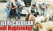Keçi hırsızları tutuklandı