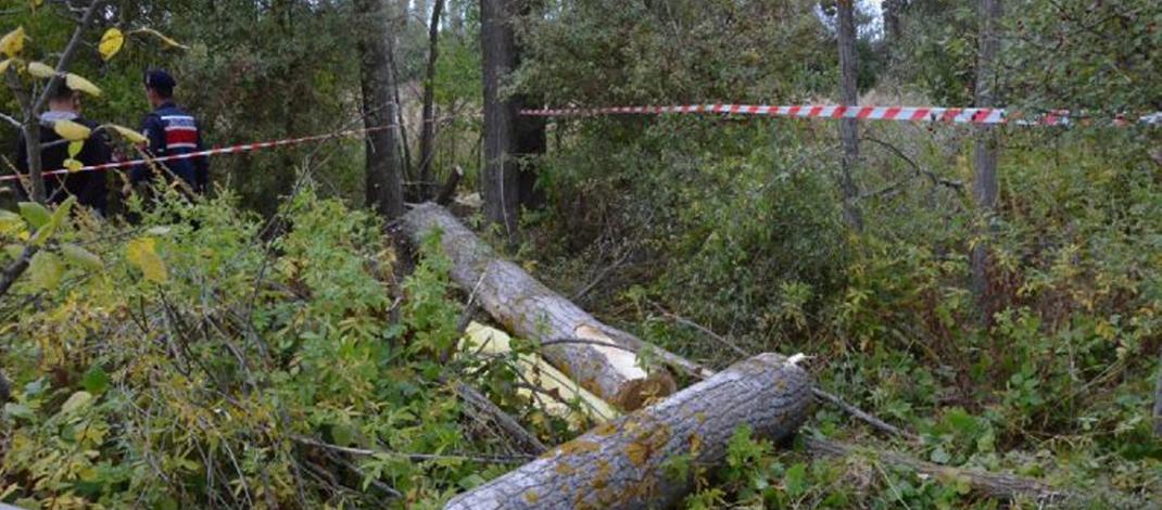 Kesilen ağacın altında kalan orman işçisi hayatını kaybetti